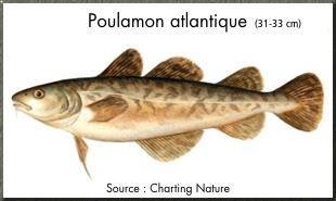 poulamon_atlantique.jpg